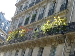 Balcons fleuris à Paris. Source : http://data.abuledu.org/URI/581a2762-balcons-fleuris-a-paris
