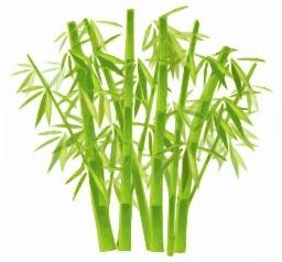 Bambous. Source : http://data.abuledu.org/URI/54042967-bambous