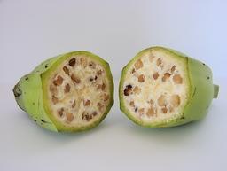 Banane sauvage verte. Source : http://data.abuledu.org/URI/530f0d4c-banane-sauvage-verte