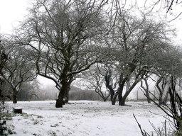 Bande de grives litornes en hiver. Source : http://data.abuledu.org/URI/517400d2-bande-de-grives-litornes-en-hiver