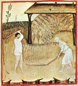 Battage et stockage des grains au moyen âge. Source : http://data.abuledu.org/URI/50bb42d6-battage-et-stockage-des-grains-au-moyen-age