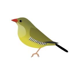 Bengali vert. Source : http://data.abuledu.org/URI/529b5817-bengali-vert