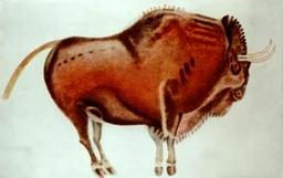 Bison polychrome d'Altamira. Source : http://data.abuledu.org/URI/52488551-bison-polychrome-d-altamira