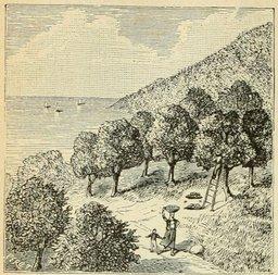 Bois d'oranger près de Nice. Source : http://data.abuledu.org/URI/524dca6c-bois-d-oranger-pres-de-nice