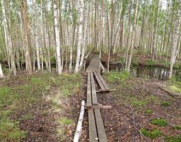 Bois de bouleaux. Source : http://data.abuledu.org/URI/505bab70-bois-de-bouleaux