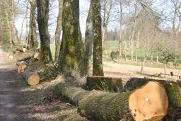 Bois de châtaignier. Source : http://data.abuledu.org/URI/51a13252-bois-de-chataignier