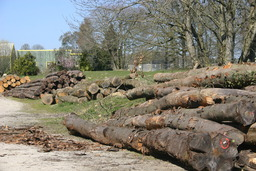 Bois de merisier. Source : http://data.abuledu.org/URI/51a132c0-bois-de-merisier