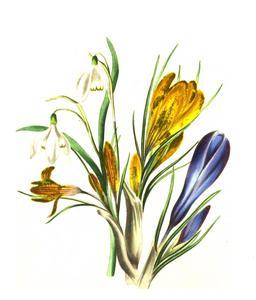 Bouquet d'hiver en 1836. Source : http://data.abuledu.org/URI/53ed4a03-bouquet-d-hiver-en-1836
