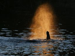 Bout de la trompe d'un éléphant qui franchit un fleuve. Source : http://data.abuledu.org/URI/52d03b69-bout-de-la-trompe-d-un-elephant-qui-franchit-un-fleuve