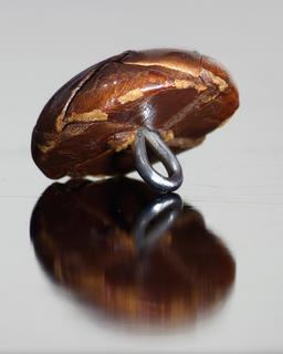 Bouton en cuir vu de dessous. Source : http://data.abuledu.org/URI/5317607a-bouton-en-cuir-vu-de-dessous