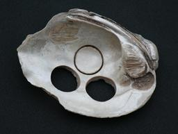 Boutons dans un coquillage. Source : http://data.abuledu.org/URI/53175bfb-boutons-dans-un-coquillage