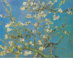 Branche d'amandier en fleurs. Source : http://data.abuledu.org/URI/5468e0b9-branche-d-amandier-en-fleurs