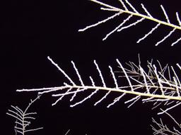 Branches gelées de nuit. Source : http://data.abuledu.org/URI/54b2dbe4-branches-gelees-de-nuit