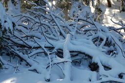 Branches sous la neige. Source : http://data.abuledu.org/URI/59079fda-branches-sous-la-neige