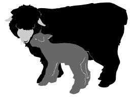 Brebis et agneau. Source : http://data.abuledu.org/URI/5049e7c9-brebis-et-agneau