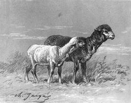 Brebis et agneau. Source : http://data.abuledu.org/URI/515061bf-brebis-et-agneau