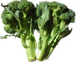 Broccoli. Source : http://data.abuledu.org/URI/50880882-broccoli-