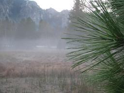 Brouillard et rosée du matin sur aiguilles de pin. Source : http://data.abuledu.org/URI/538ae345-brouillard-et-rosee-du-matin-sur-aiguilles-de-pin