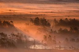 Brouillard matinal en Estonie. Source : http://data.abuledu.org/URI/5630d605-brouillard-matinal-en-estonie