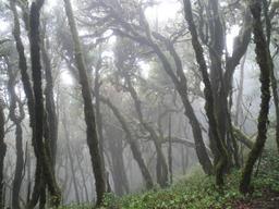 Brume en forêt. Source : http://data.abuledu.org/URI/54779a09-brume-en-foret