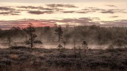 Brume matinale en Estonie. Source : http://data.abuledu.org/URI/55223ff0-brume-matinale-en-estonie