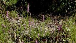 Bruyère dans le parc du Bourgailh. Source : http://data.abuledu.org/URI/5826c44e-bruyere-dans-le-parc-du-bourgailh