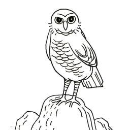 Buse perchée sur un rocher. Source : http://data.abuledu.org/URI/52d48f62-buse-perchee-sur-un-rocher