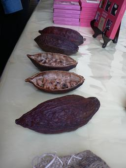 Cabosses sèches de cacao. Source : http://data.abuledu.org/URI/51988cac-cabosses-seches-de-cacao