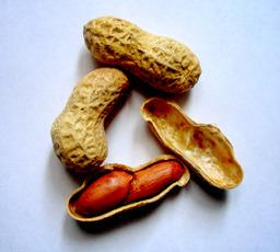 Cacahuètes. Source : http://data.abuledu.org/URI/47f44ac0-cacahu-tes
