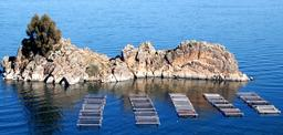 Cages à poissons en Bolivie. Source : http://data.abuledu.org/URI/52081814-cages-a-poissons-en-bolovie