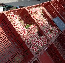 Cagettes de radis en vente. Source : http://data.abuledu.org/URI/536a12e1-cagettes-de-radis-en-vente