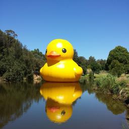 Caneton gonflable géant à Sydney. Source : http://data.abuledu.org/URI/5329c4ab-caneton-gonflable-geant-a-sydney