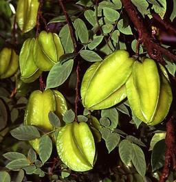 Carambole. Source : http://data.abuledu.org/URI/5087fdc6-carambole