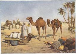 Caravane de dromadaires. Source : http://data.abuledu.org/URI/51fd1f83-caravane-de-dromadaires