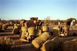 Caravane du sel dans le Massif de l'Aïr. Source : http://data.abuledu.org/URI/52d1c7c3-caravane-du-sel-dans-le-massif-de-l-air