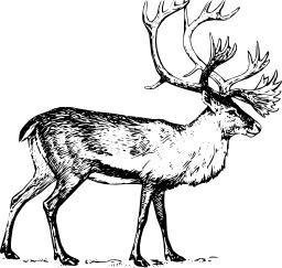 Caribou. Source : http://data.abuledu.org/URI/504a6269-caribou