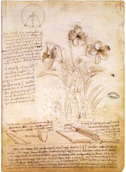 Carnet de Léonard de Vinci. Source : http://data.abuledu.org/URI/503019d1-carnet-de-leonard-de-vinci