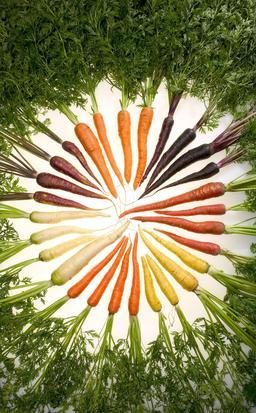 Carottes de différentes couleurs. Source : http://data.abuledu.org/URI/504f4feb-carottes-de-differentes-couleurs