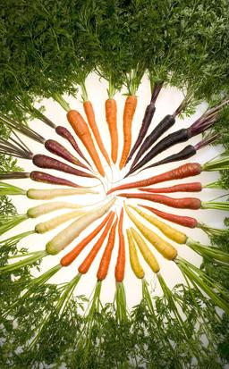 Carottes multicolores. Source : http://data.abuledu.org/URI/52bf18cf-carottes-multicolores