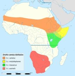 Carte légendée de répartition des autruches en Afrique. Source : http://data.abuledu.org/URI/5387932a-carte-legendee-de-repartition-des-autruches-en-afrique