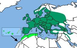 Cartographie des mésanges. Source : http://data.abuledu.org/URI/5249e4e6-cartographie-des-mesanges