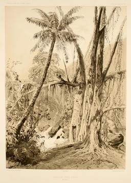 Cascade aux iles Samoa en 1838. Source : http://data.abuledu.org/URI/5980a5fe-cascade-aux-iles-samoa-en-1838