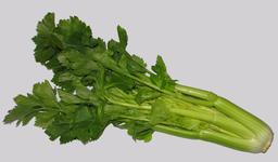 Cèleri. Source : http://data.abuledu.org/URI/5098f1ad-celeri