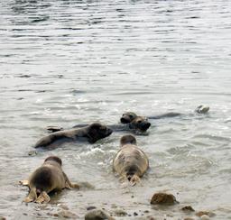 Centre des mammifères marins. Source : http://data.abuledu.org/URI/522f06f9-centre-des-mammiferes-marins