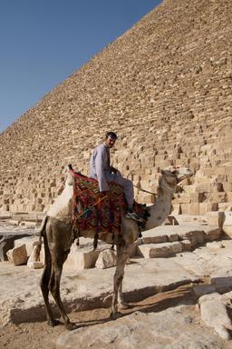 Chameau devant la pyramide de Chéops. Source : http://data.abuledu.org/URI/520e1cac-chameau-devant-la-pyramide-de-cheops