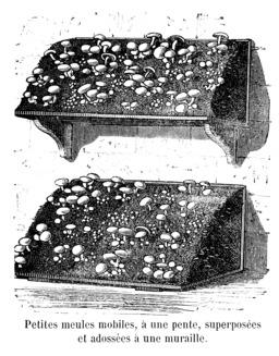 Champignon de culture sur petites meules mobiles. Source : http://data.abuledu.org/URI/5451546a-champignon-de-culture-sur-petites-meules-mobiles