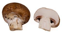 Champignon en cours de préparation. Source : http://data.abuledu.org/URI/532d5c6e-champignon-en-cours-de-preparation