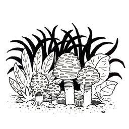 Champignons. Source : http://data.abuledu.org/URI/52d7010c-champignons