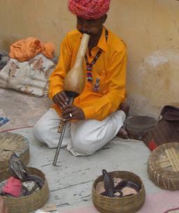 Charmeur de serpent jouant du pungi. Source : http://data.abuledu.org/URI/53070957-charmeur-de-serpent-jouant-du-pungi