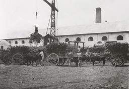 Charroi de canne à sucre à La Réunion. Source : http://data.abuledu.org/URI/52777494-charroi-de-canne-a-sucre-a-la-reunion